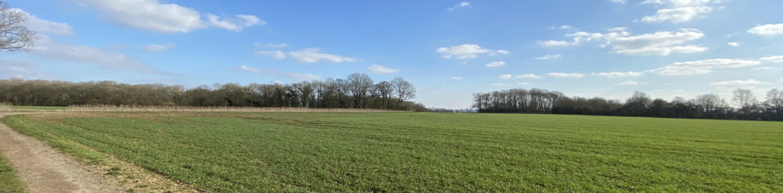 View over field looking towards Bush Wood